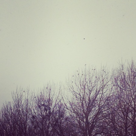 Birds in trees.
